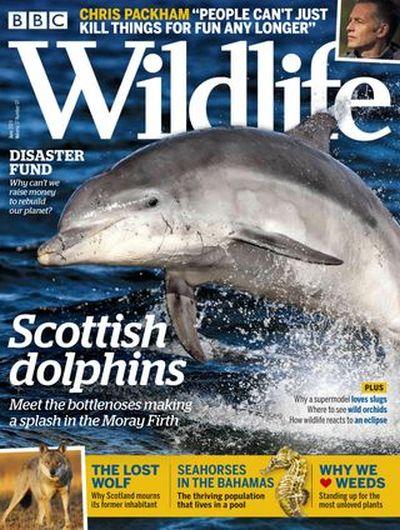 BBC Wild life – June 2019