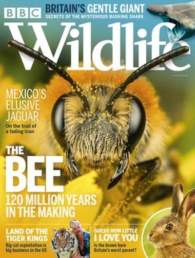 BBC Wildlife – July 2020