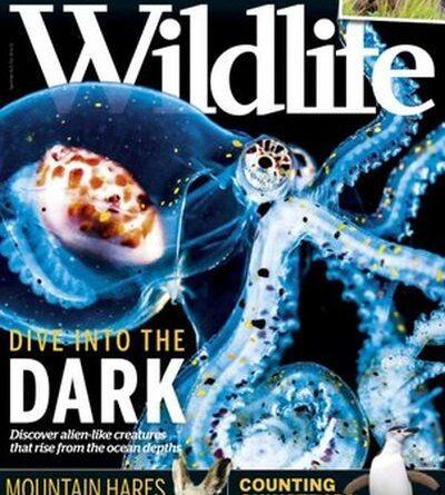 BBC Wildlife - September 2020