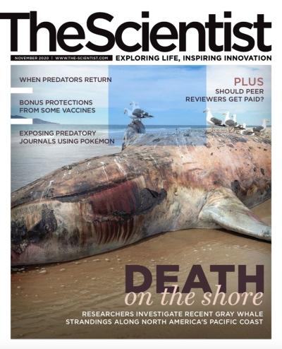 The Scientist - November 2020